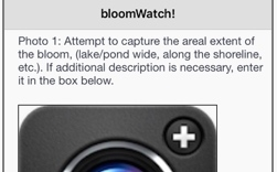 Report blooms using bloomWatch app